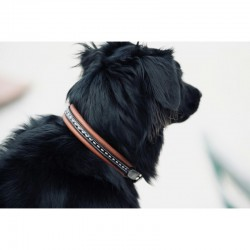 "COLLIER POUR CHIEN PENELOPE ""POINT SELLIER"""